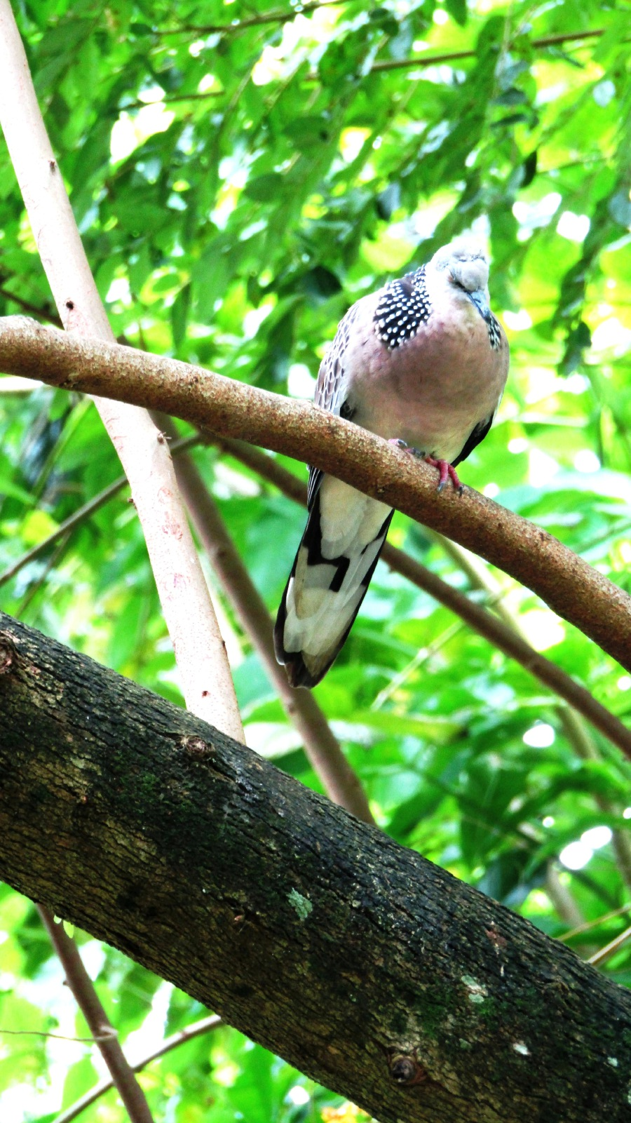 0001b0ec42 Picks: Best birdshots   New Straits Times   Malaysia General ...