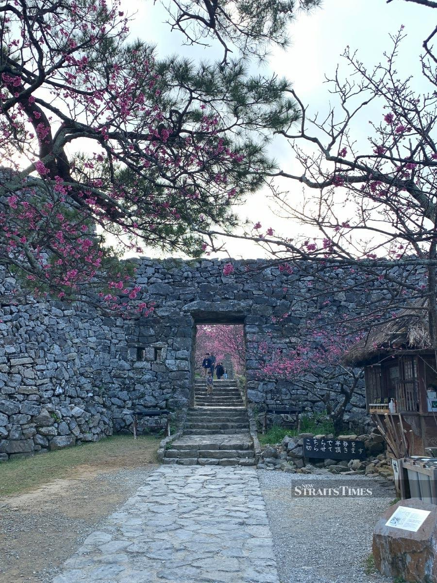A glimpse of Nakijin Castle located in the northern part of Okinawa island.