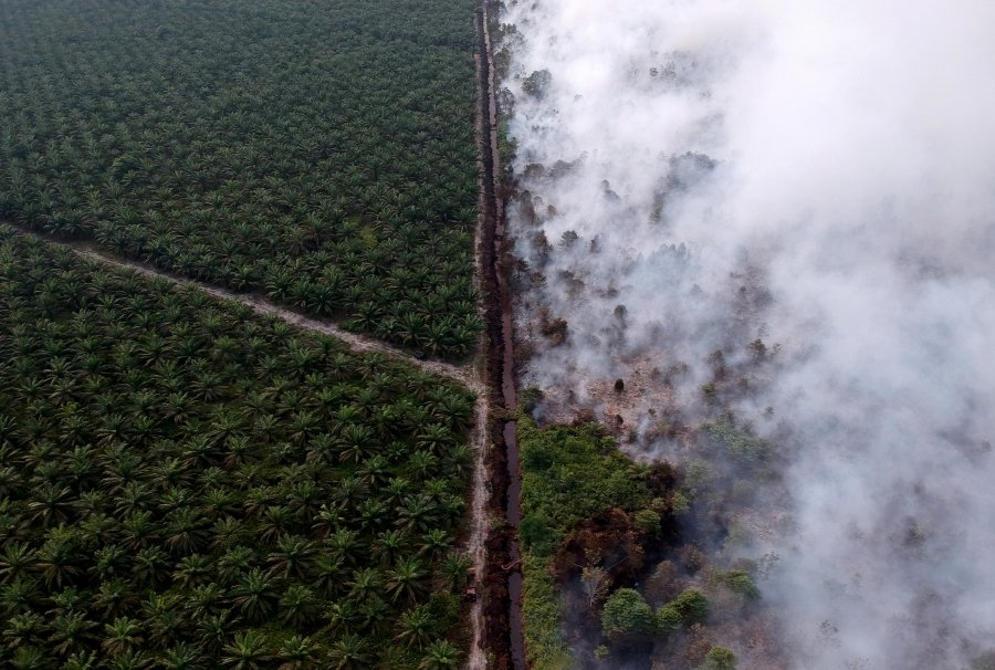 An aerial view of forest fire next to oil palm plantation at Kumpeh Ulu district in Muarojambi, Indonesia, July 30, 2019 in this photo taken by Antara Foto. - Antara Foto/Wahdi Septiawan/ via REUTERS