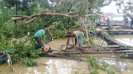 Fish Farmers Lose Rm50 000 Cages Damaged By Fallen Tree