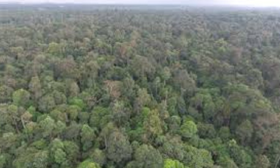 Home to more than 2,000 Temuan Orang Asli community, the Kuala Langat North Forest Reserve is also a sanctuary for critically endangered species. -NSTP/File pic
