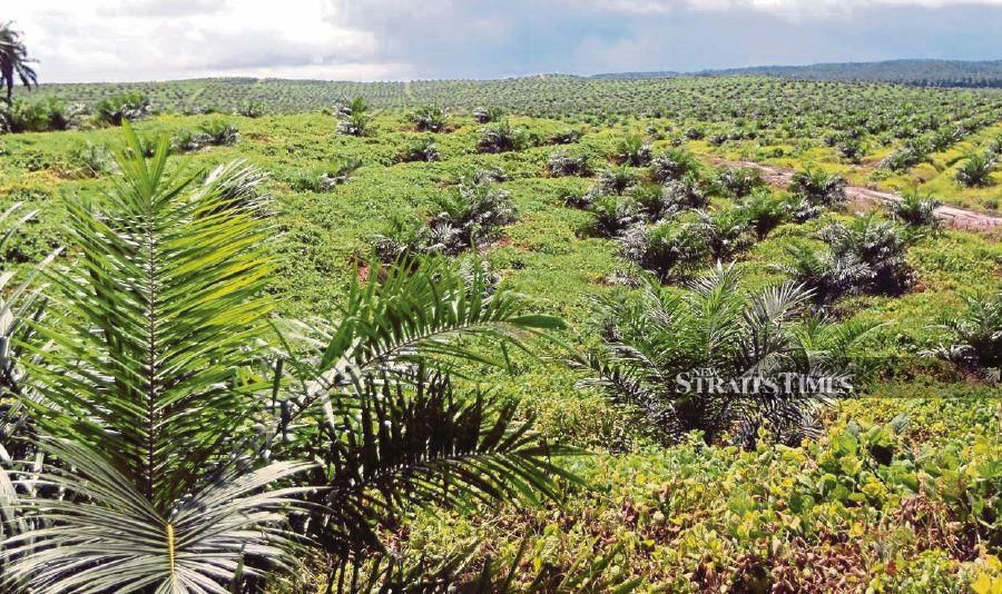 WWF-Malaysia is urging plantation owners, especially those whose lands are located adjacent to forests, to set aside part of their land as wildlife corridors. - NSTP file pic