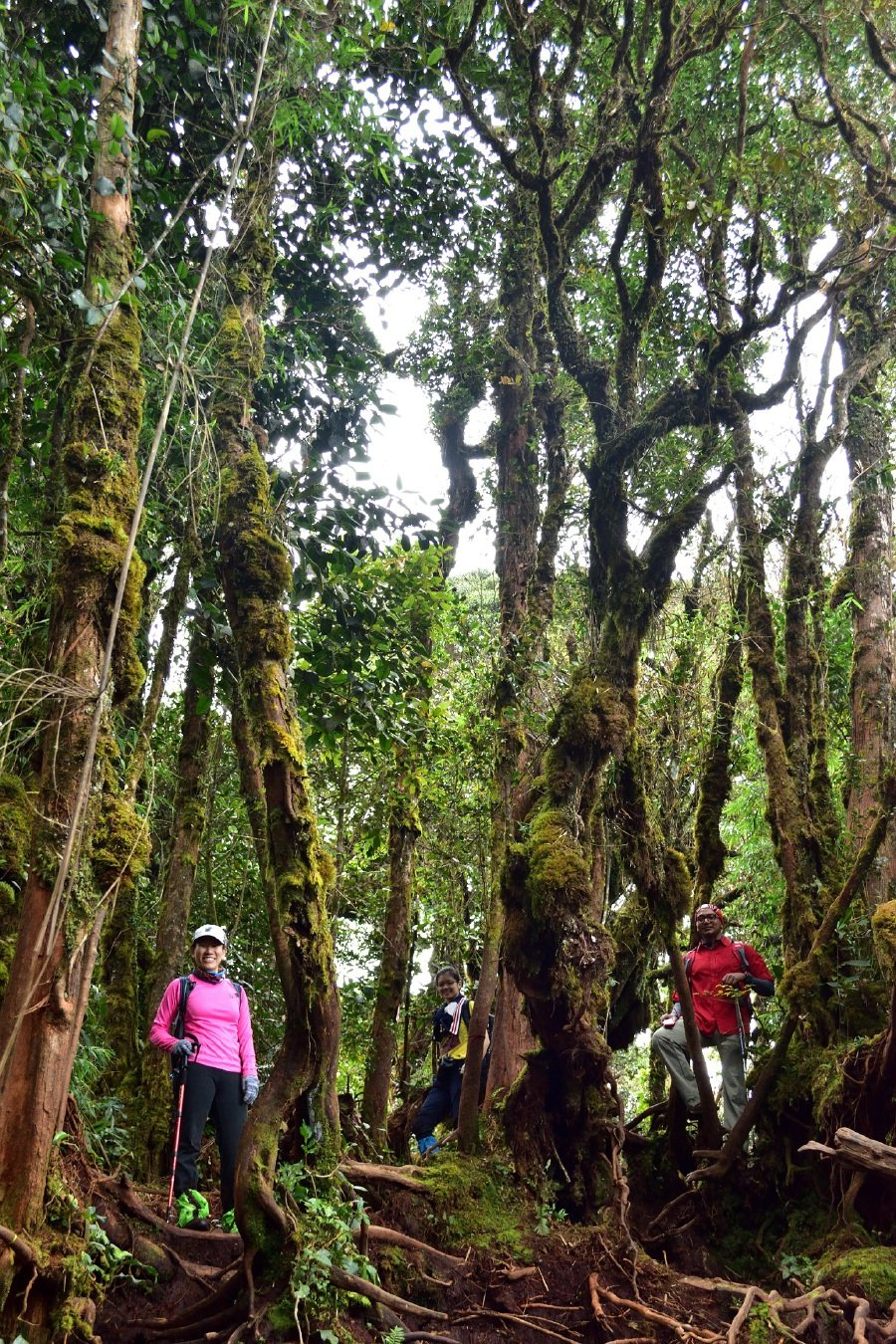 Go Bewitching Forest Of Cameron Highlands New Straits Times Malaysia General