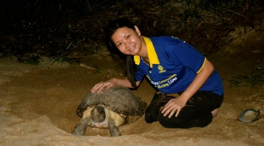 (File pix) Chen Peif Nyok, co-founder of Turtle Conservation Society of Malaysia said that they have managed to save 2,491 turtle eggs and released 1,302 hatchlings into the Setiu River between 2004 and 2014, and another 3,754 eggs and 2,401 hatchlings into the Kemaman River between 2011 and last year. Pix by Adrian David