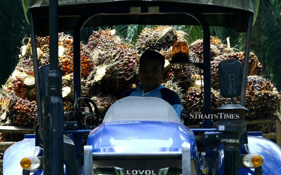 Trade ministers from India and Malaysia are likely to meet on the sidelines of the World Economic Forum's annual meeting in Davos next week amid a palm oil spat between the two countries, a Malaysian government spokesman told Reuters on Friday. - STR/ADZLAN SIDEK.