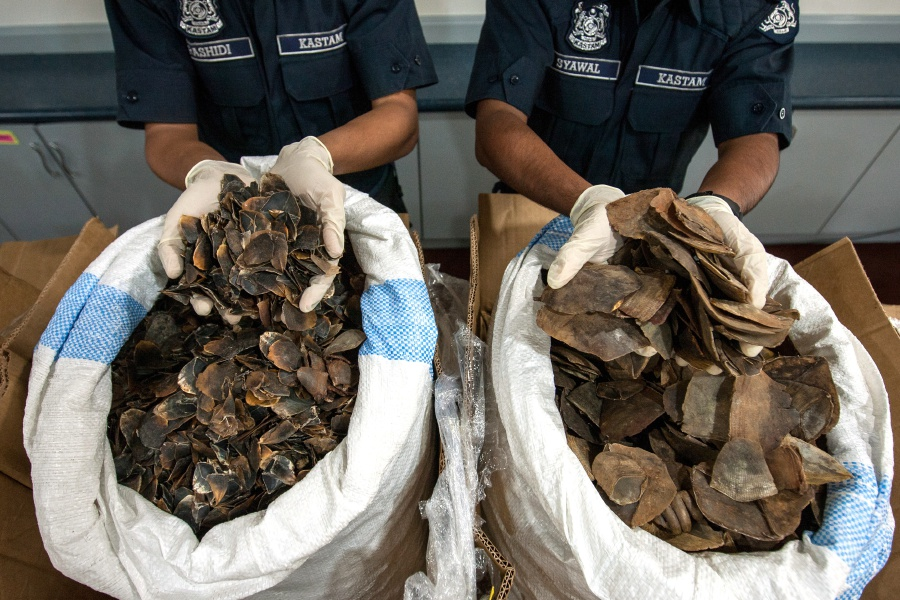 300kg of pangolin scales seized | New Straits Times