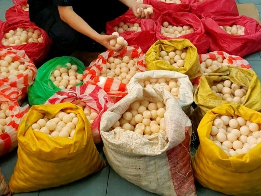(STOCK PHOTO) The district Wildlife Department seized 3,011 turtle eggs meant to be smuggled to the west coast at the main bus terminal here this morning.