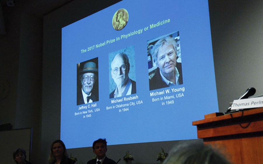 Winners of the 2017 Nobel Prize in Physiology or Medicine. (From left) Jeffrey Hall, Michael Rosbash and Michael Young are pictured on a display during a press conference at the Karolinska Institute in Stockholm on October 2, 2017. AFP