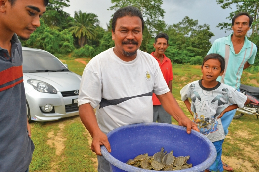 Pakcik Wazel is hired by the project to head start the river terrapins for 4-5 months before they are released into the Kemaman River.