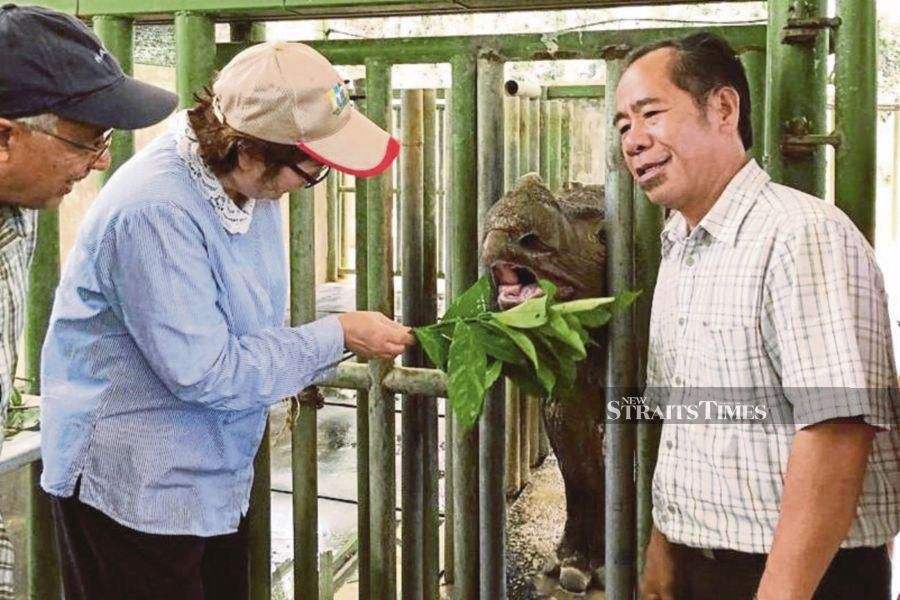 First it was Puntung, a female rhinoceros which was euthanised in 2017. Then it was Kertam or Tam, a male rhinoceros who died in May before the last one, Iman, died over the weekend. NSTP/Courtesy of Sabah Wildlife Department