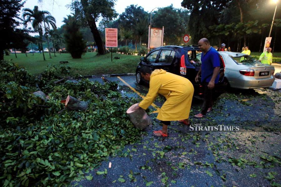 Universiti Malaya staff with firemen help clear parts of the tree. -NSTP/Mohd Yusni Ariffin.