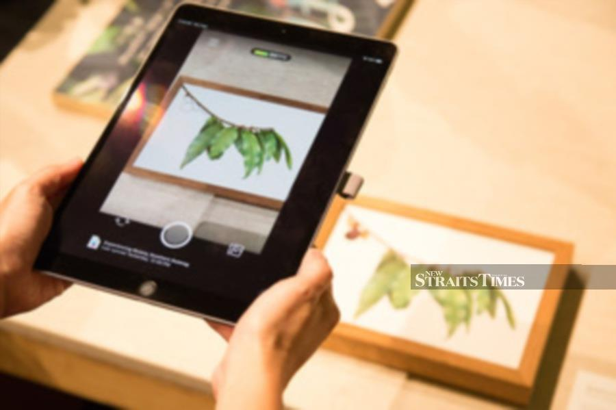 Botanical artist Lucinda Law's Experiencing Beauty experienced on iPad.