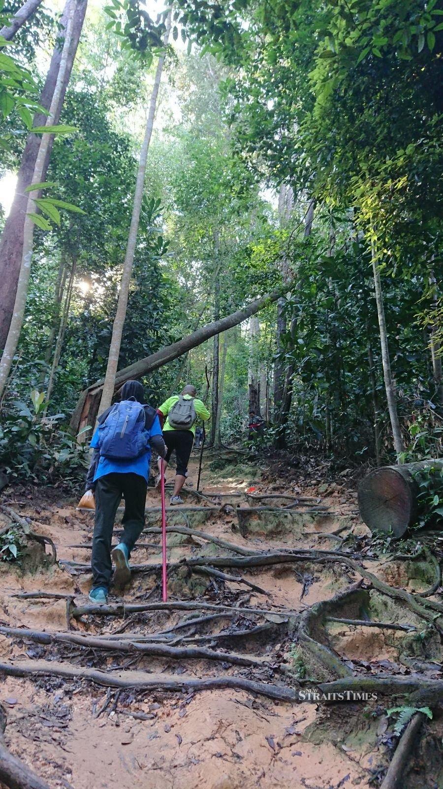 The steep ascend to Bukit Wawasan.