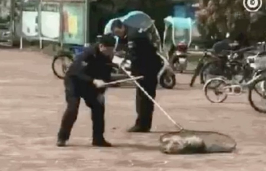 WATCH: Security guard beats stray dog to death, triggering outcry