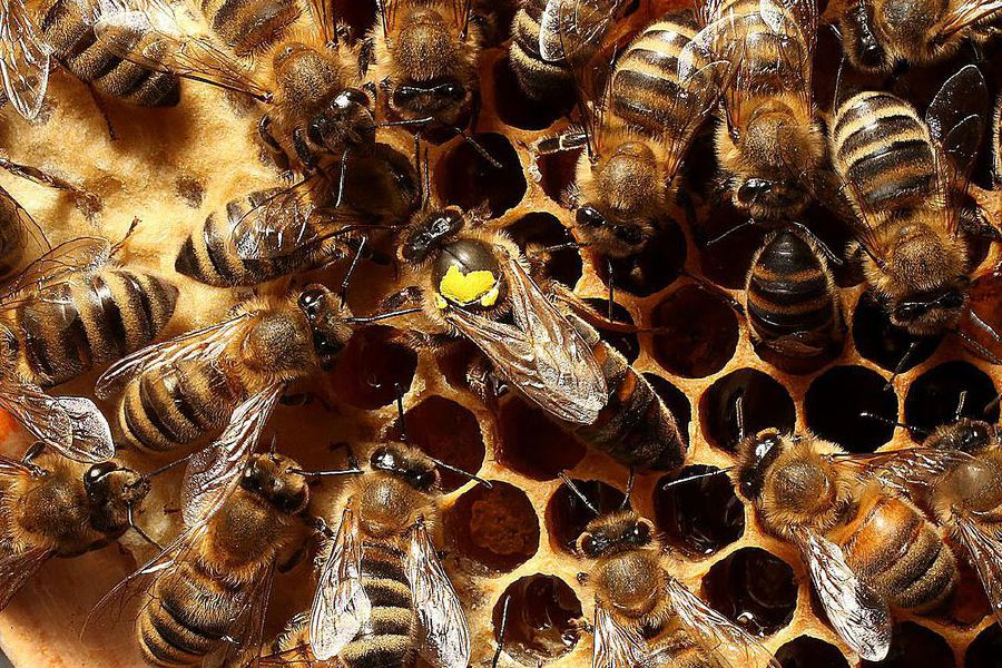 Bees attack Brazilian cops in sting gone wrong, 7 hospitalised   New
