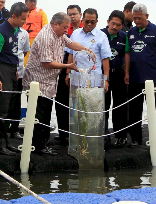 Yesterday, the Sultan of Johor, Sultan Ibrahim Sultan Iskandar launched a seahorse sanctuary and hatchery in Sungai Pulai Ramsar site. The sanctuary located in a 14.86 square metre area, was jointly developed by J-Biotech and Universiti Malaysia Terengganu. Pix by Mohd Azren Jamaludin.