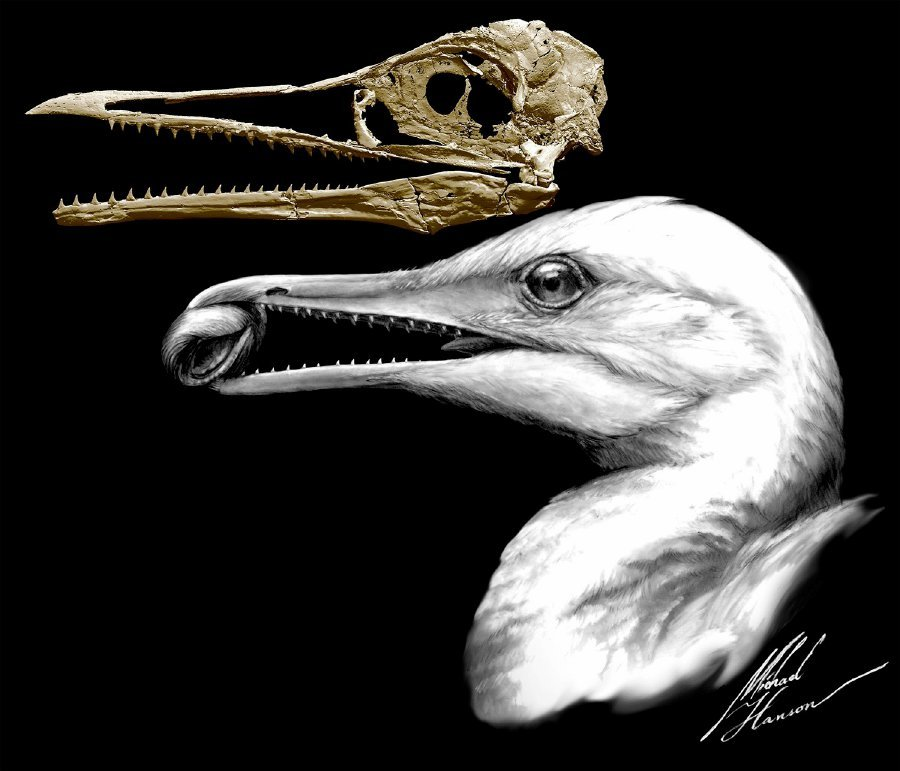 This is what the first bird beak looked like