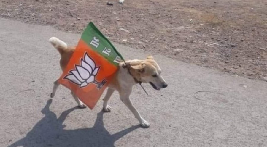 Dog, owner detained for election campaigning in India | New Straits