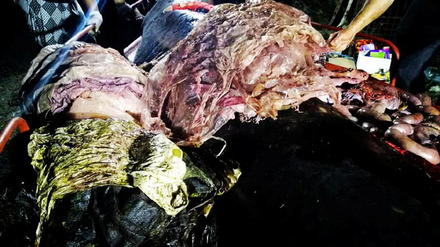 Image result for Dead Philippines whale had 40kg of plastic in stomach