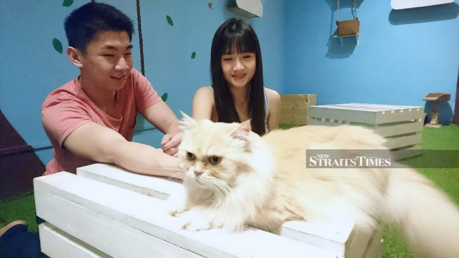 Miguel Lim (left) and Jinnie Siew spending their Valentine's Day surrounded by cats. - NSTP/MUSTAFFA KAMAL
