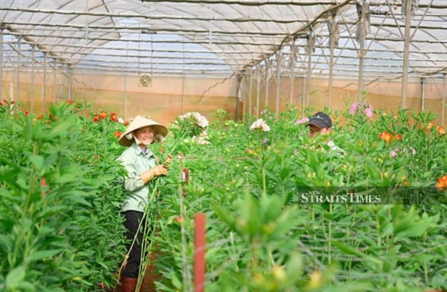 Flowers are a booming industry in Vietnam. Pipx courtesy of HortEx Vietnam 2020.