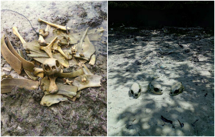 Hundreds of bones from dead sea turtle carcasses were found scattered in some bushes on Pulau Bum Bum off Semporna here today.