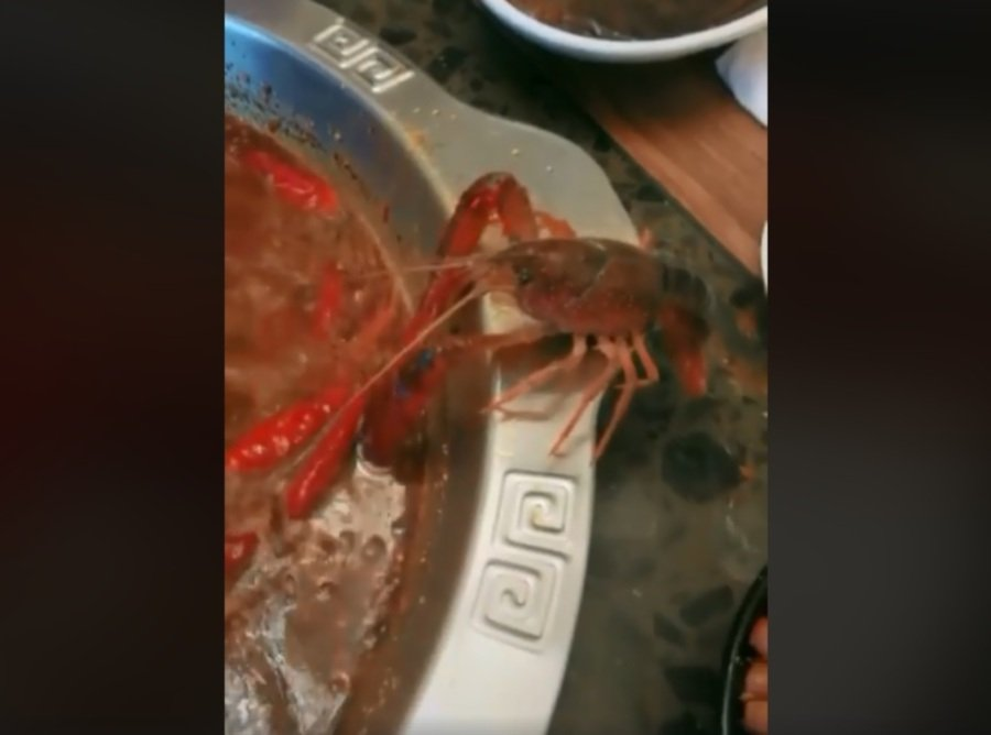 Crawfish escapes hot pot by chopping off its claw