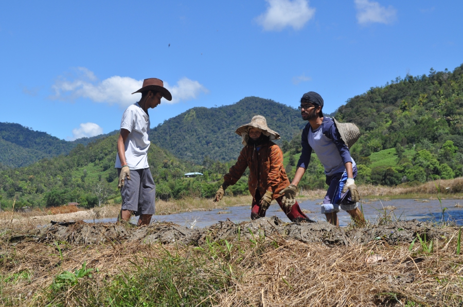 Volunteers helping to clear the paddy plots in preparation for planting season.