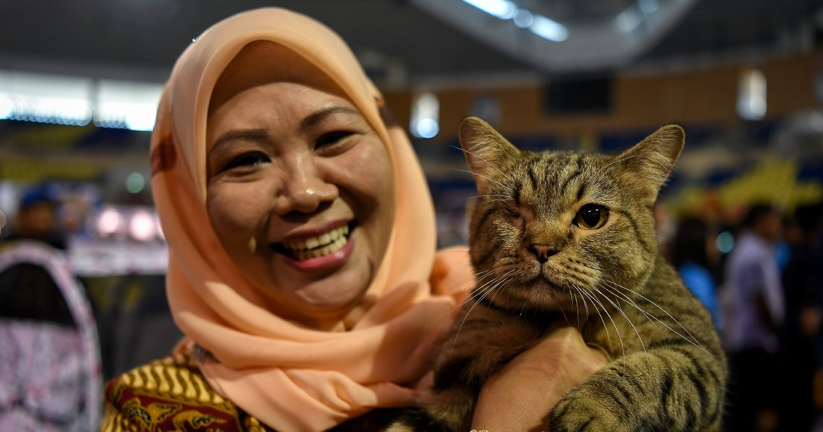 From abused street kitten to international show cat