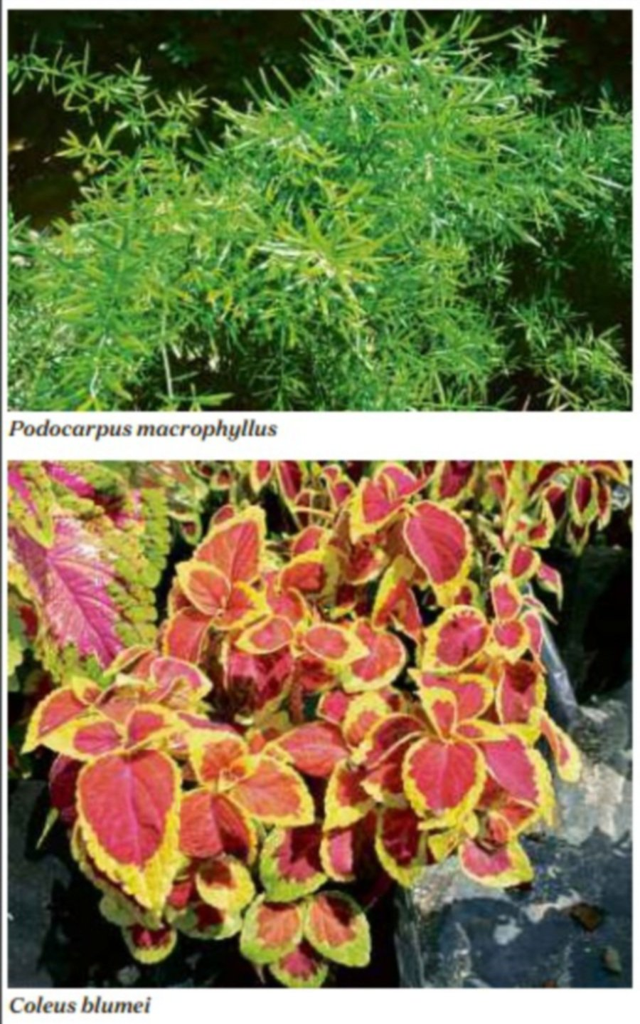 The charm of non-flowering plants | New Straits Times ... on green house plants, purple house plants, blue house plants, lavender house plants, tropical house plants, moss house plants, orange house plants, evergreen house plants, easy to take care of house plants, cacti house plants, flowers house plants, dead house plants, perfect house plants,