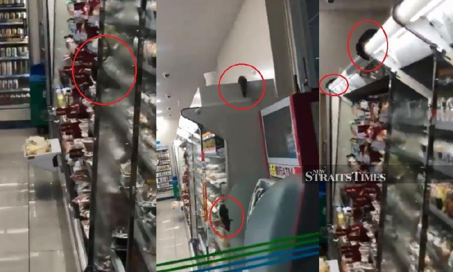 This videograb shows rats sprawling all over the alleged FamilyMart store in Shibuya district.