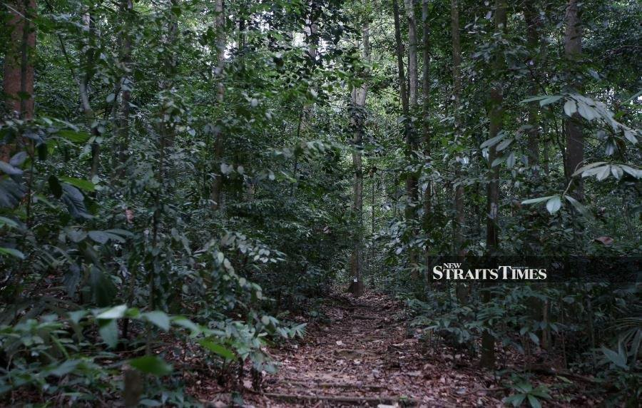 (Filepic) CAMBODIA'S forest cover was over 73 per cent in 1975 but it has shrunk to only about 47 per cent last year. -NSTP Archive