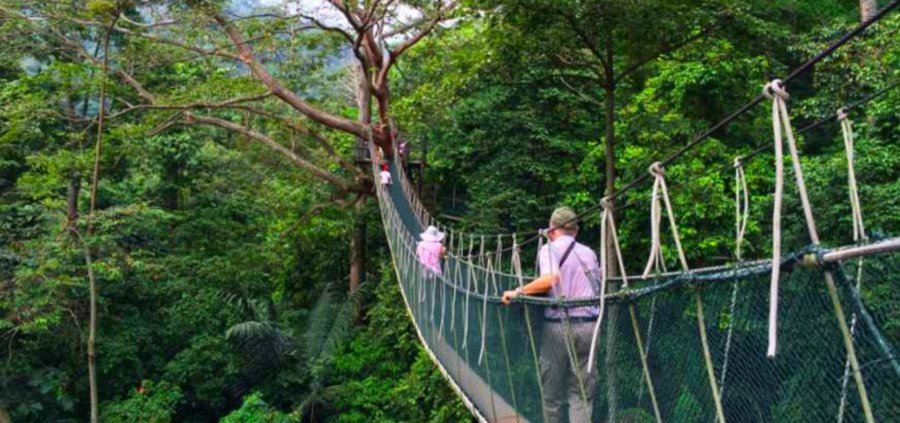 THE Canopy Walkway at Forest Research Institute Malaysia (FRIM) in Kepong Selangor will be closed from June 30. & Sick trees force FRIM to close walkway for good from June 30 | New ...