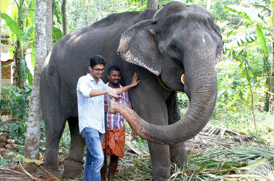 This photo taken on April 18, 2016 shows elderly Indian elephant Dakshayani, awarded the title 'Gaja Muthassi', or elephant granny, with her keeper and a visitor on the grounds of the Chengalloor Mahadeva temple in Thiruvananthapuram in India's southern Kerala state. An elephant believed to be the oldest ever in captivity has died aged 88 in the southern Indian state of Kerala. - AFP