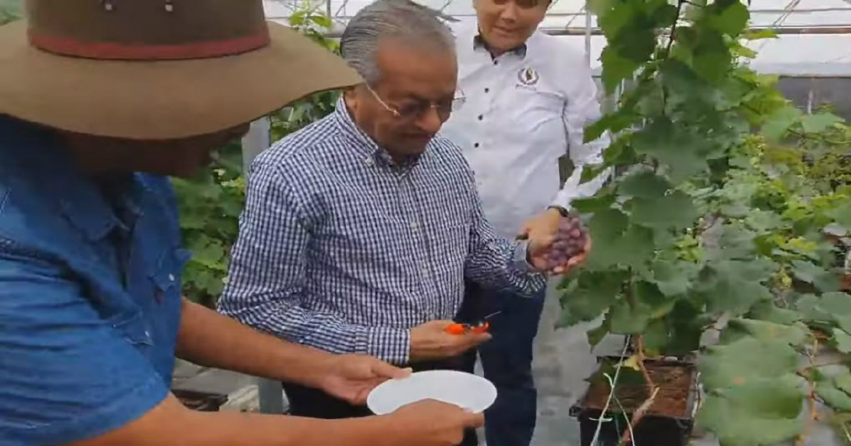 Dr M visits grape farm