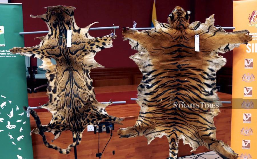 Animal cruelty on the rise in Malaysia