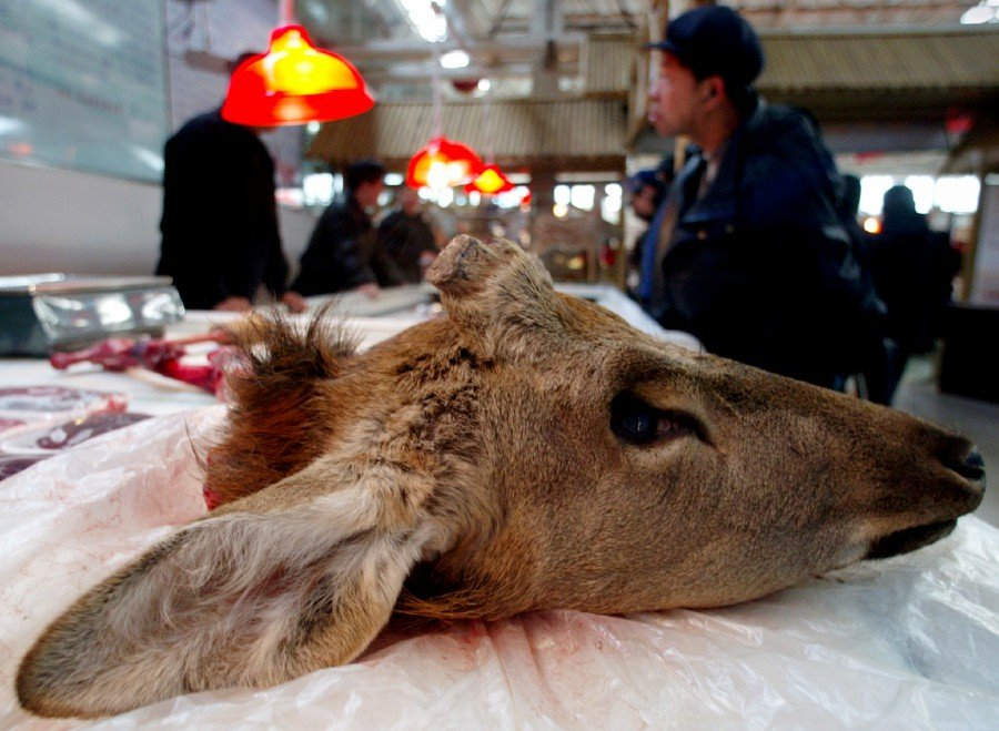 A head of a deer is displayed at a newly opened market in Beijing which specialises in selling exotic animal meat, China on November 26, 2002. -Reuters/File pic