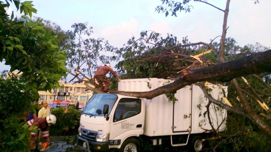 Cars damaged by fallen trees as freak storm lashes Kulai