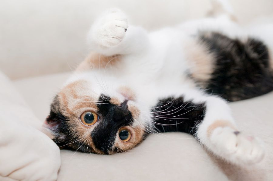 Cats are able to distinguish their own names from other similar-sounding words, even when said by strangers, according to new research released today. (Picture via Creative Commons)