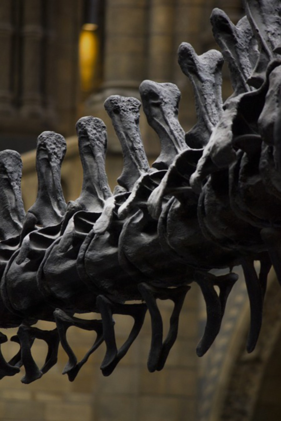 New dinosaur species discovered in Japan | New Straits Times
