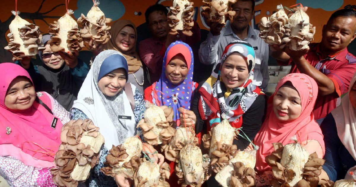 SK Bakong's PTA generates fund for school… by planting mushrooms