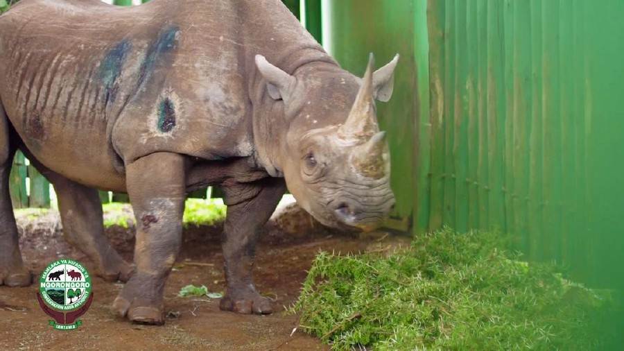 'World's oldest rhino' dies at age of 57 in Tanzania