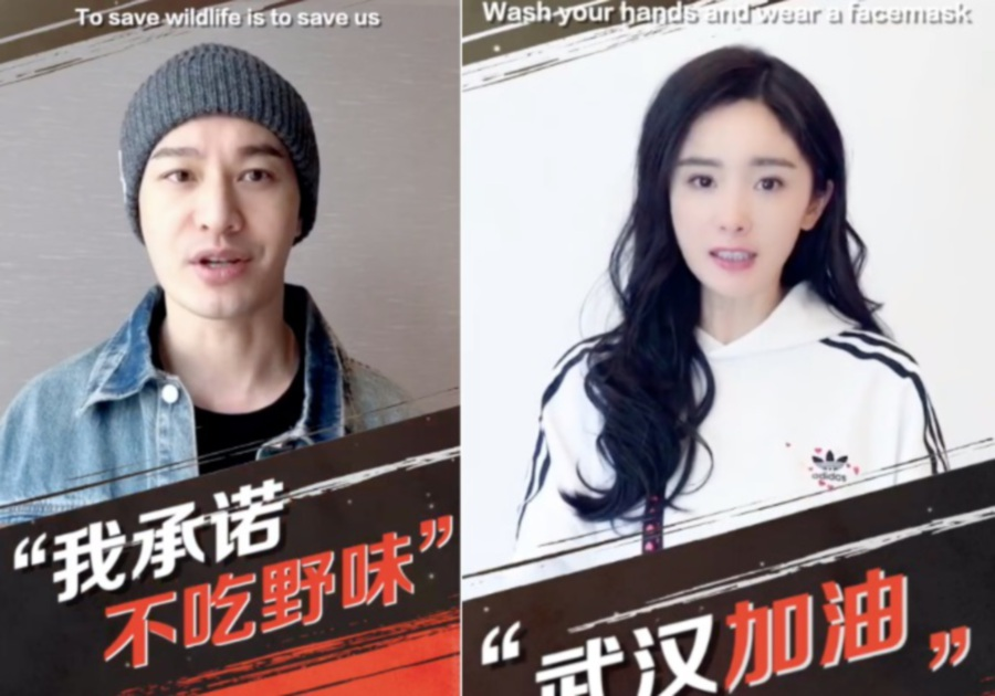 Chinese celebs have appeared in a video montage to encourage people not to consume exotic wildlife which has been claimed to have been the source of the deadly Covid-19 outbreak originating from Wuhan, China. (Picture from Asia One)