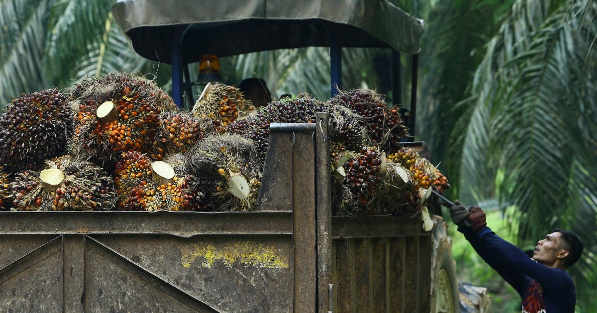 Sustainability and palm oil