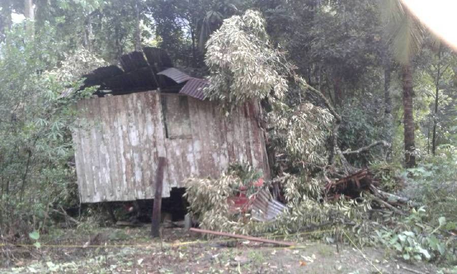 Podtung @ Gowonod Talah, 76 died on the scene when a durian tree fell on the hut where he was sleeping in Penampang. Pix courtesy of NST Reader