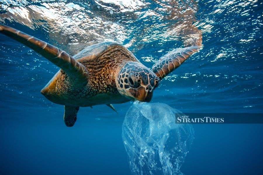 100,000 marine animals are killed by plastic bags annually.