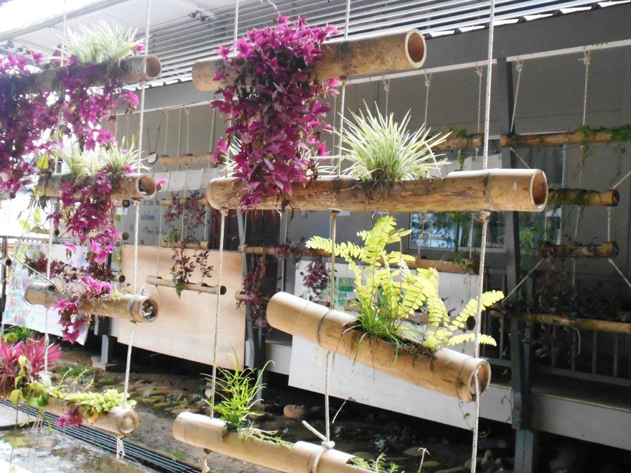 Beauty of bamboo planters new straits times malaysia for Hanging bamboo privacy screen