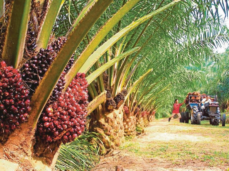 The key is to rethink the European Union's misguided policy on palm oil. -- NSTP Archive