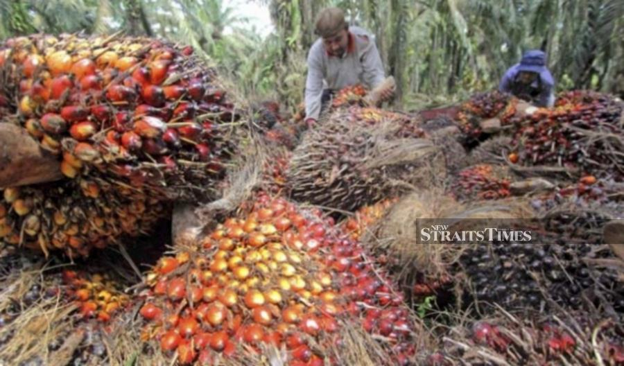 Crude palm oil (CPO) price surged to its highest level in nearly three years at RM3,025 per tonne on December 31 last year, according to the Malaysian Palm Oil Board (MPOB).