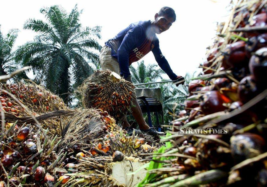 The palm oil industry continues to shape our life then, now and in the future as palm agro-commodity, involving upstream and downstream activities, helped Malaysia to become one of the largest palm oil producing countries in the world. - NSTP file pic